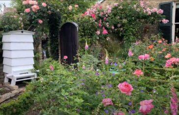 Carrie's garden