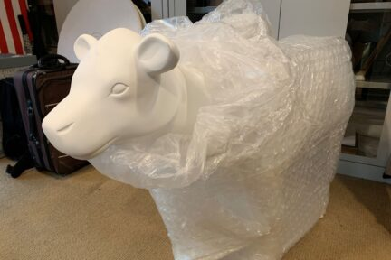 Unwrapping of the Museum of Cambridge mini-moo, a pure white cow sculpture, wrapped in white bubblewrap with only the cow head visible